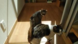 柏市で猫のペットシッター
