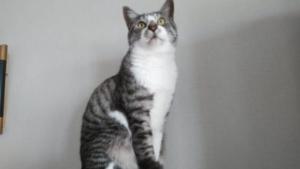 ペットシッター 柏市 猫
