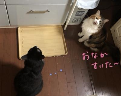 ペットシッターご飯の準備