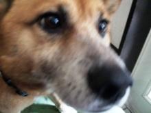 和ペット-wapet- スタッフ日記