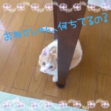 $和ペット-wapet- スタッフ日記
