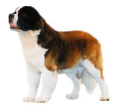 ペットシッター和ペット、犬種一覧、超大型犬。